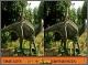 Различия в мире динозавров