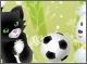 Домашние питомцы: Футбол